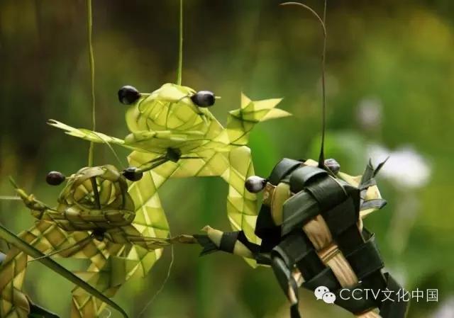 棕叶编织 - cctv文化中国